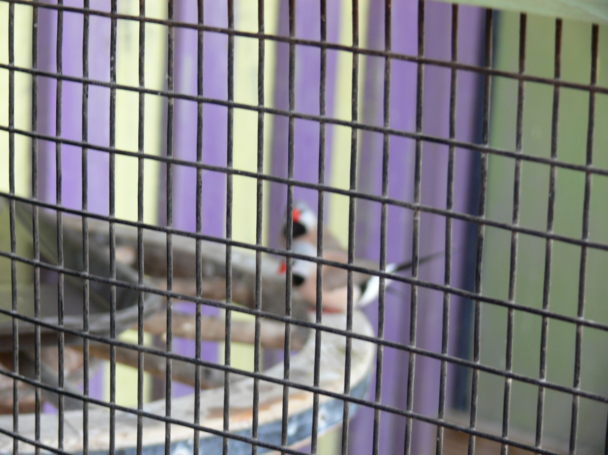 Finches Lowry Pk Zoo (60)