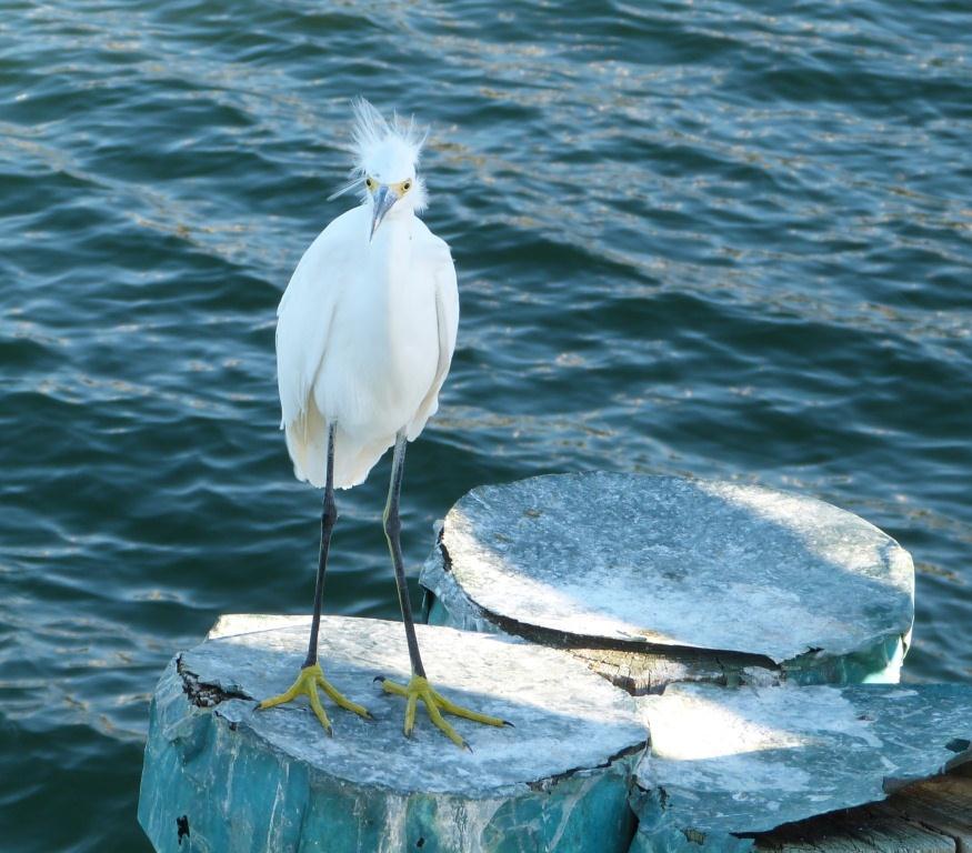 Bible Birds - Filling The Ark (1/3)