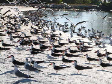 Birds on Shore of Tampa Bay