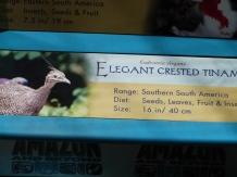 Elegant Crested Tinamou (Eudromia elegans) Sign