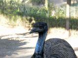Emu 20101021 Lowry Pk Zoo