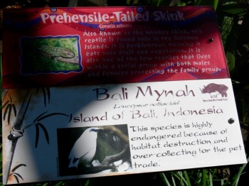 Bali Myna (Leucopsar rothschildi) Sign at LPZ