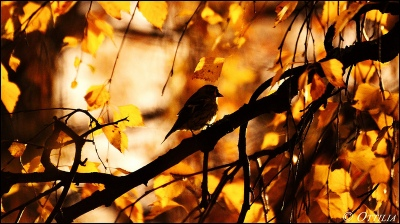 Autumn Bird ©Flickr by YlvaS