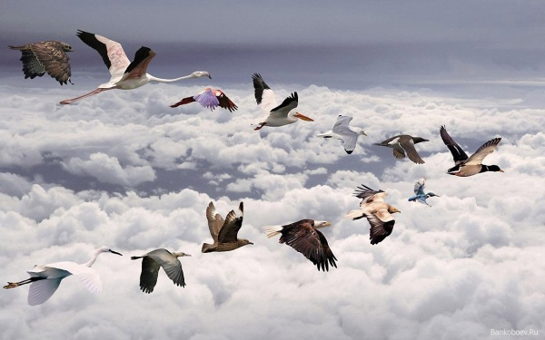 Mixed Flock of birds flying in a V Formation- Put together- ©Creative Commons