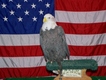 Uncle Sam Eagle at Titusville by Dan