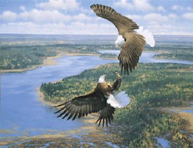 Guest Author | Lee's Birdwatching Adventures Plus