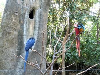 Parrots - McCaws by Lee