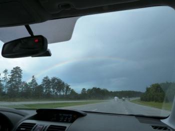 Carolina rainbow