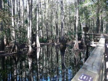 Cypress Swamp Highlands Hammock SP 11-14-2009 by Lee