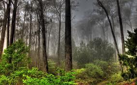 Trees Trees Trees - AJmithra
