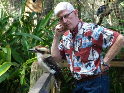 Laughing Kookabura Brevard Zoo