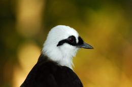 Sunday Inspiration – Passeriformes ReviewIII