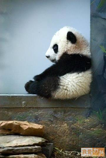 Absolutely nothing accomplished.  The perfect day for a panda