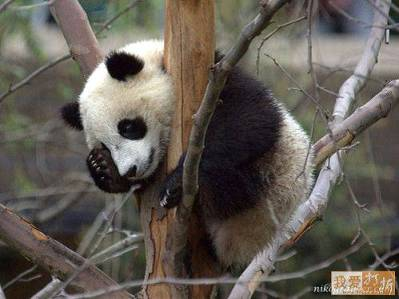 I cannot believe that I'm stuck in this tree again.  What is the matter with me?