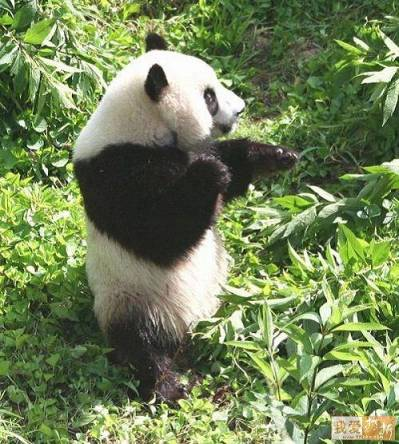 Kung Fu Panda...bring it on!