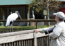 Lee with Wood Stork at Gatorland by Dan 2c