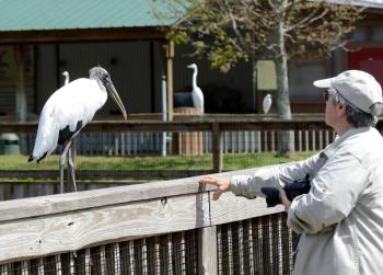 Lee with Wood Stork at Gatorland by Dan