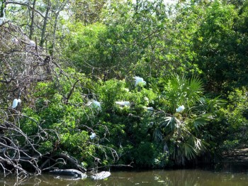 Rookery with Gator protection