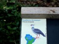 Southern Screamer Sign at Cincinnati Zoo 9-5-13 by Lee