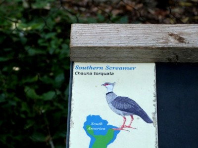Southern Screamer Sign at Cincinnati  Zoo