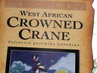 GRU-Grui Black Crowned Crane (Balearica pavonina pavonina) (West African) (8)
