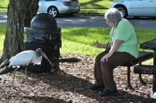 Wood Stork & Lee by Dan at Lake Morton