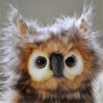 Owl from Dusky's Wonders