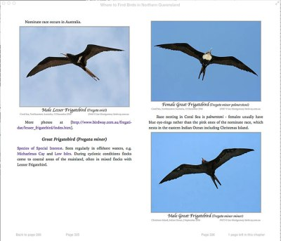 Great Frigatebird (Fregata minor) by Ian