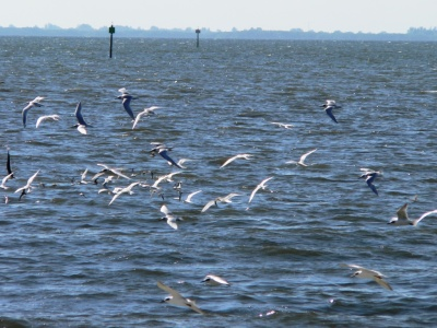 Birds Flying over Tampa Bay by Lee