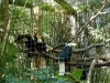 Wreathed Hornbill (Rhyticeros undulatus) Central Florida Zoo by Lee