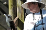Laughing Kookaburra at Brevard Zoo by Dan with my camera
