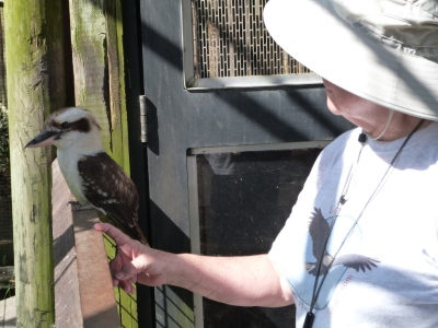 Lee very close to Kookabura by Dan