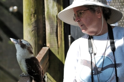 Lee with Laughing Kookabura at Brevard Zoo by Dan