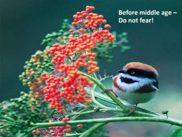 Wise Advice From The Birds – ViaEmail