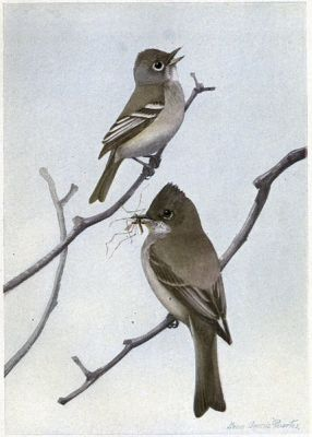 Chebec the Least Flycatcher, Dear Me the Phoebe - Burgess Bird Book ©©