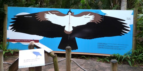 Condor-Turkey-King Vulture Sign at Brevard Zoo by Lee