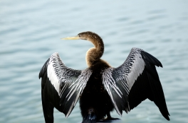 Anhinga Lake Morton by Dan
