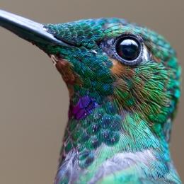 Fantastic Close-up –Wow!