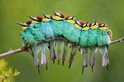 Bee-eaters From Pinterest