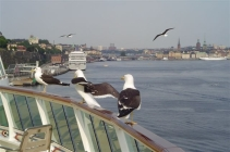 SeaGulls on Rail by James Johnson