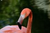 Dan's American Flamingo Gardens Photos