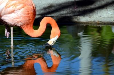 Flamingo by Dan' at Flamingo Gardens
