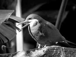 5 Day Black and White Photo Challenge #5 – Happy Bird