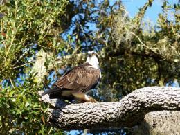 Circle B Birdwatching Trip February2015