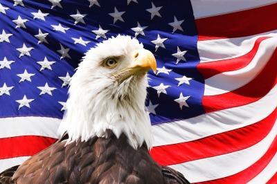 Bald Eagle and a flag