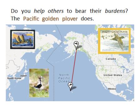 Pacific Golden Plover Map