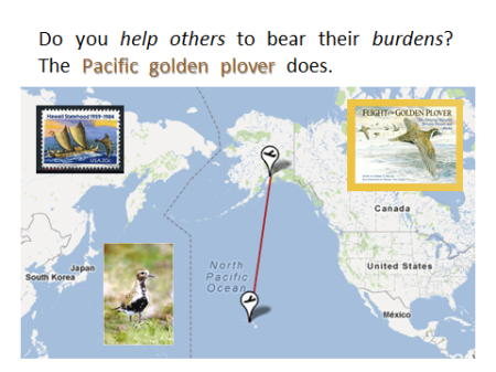 Pacific Golden Plover Map