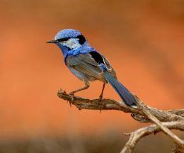 Sunday Inspiration – AustralianBirds