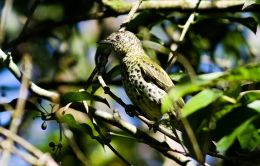 Avian And Attributes – Sharp PartI
