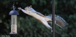 Tickle Me Tuesday – Squirrels and BirdFeeders